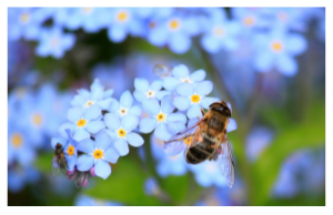 Attracting bees to gardens in England